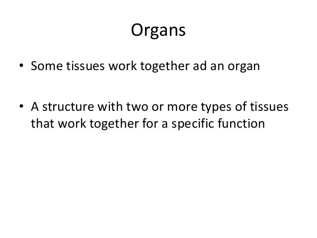 introduction to cell tissue and organ Introduction to cells, tissues, organs and systems 304-7 explain structural and functional relationships between and among cells, tissues, organs and.