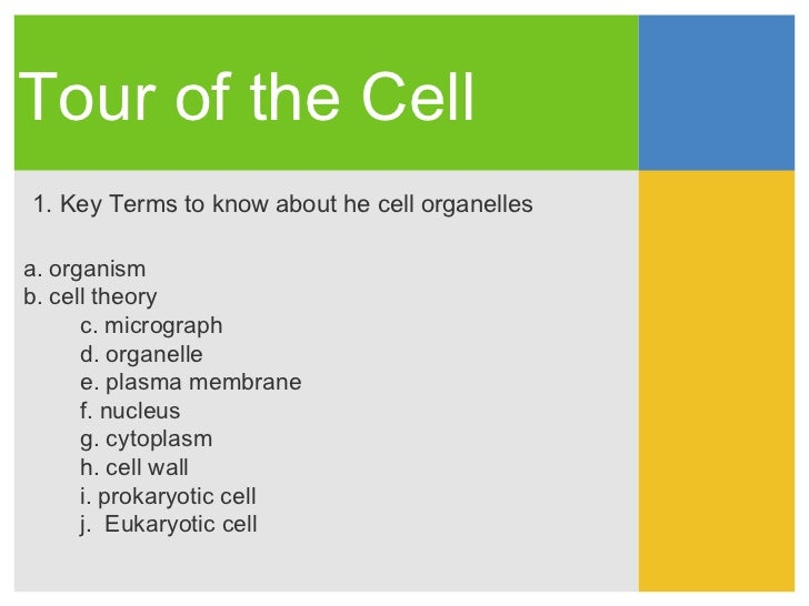 Tour of the Cell1. Key Terms to know about he cell organellesa. organismb. cell theory      c. micrograph      d. organell...