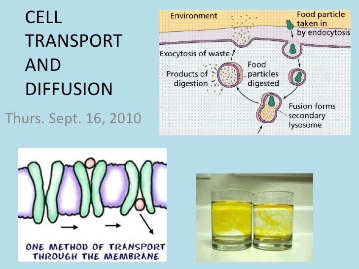 CELL TRANSPORT AND DIFFUSION<br />Thurs. Sept. 16, 2010<br />