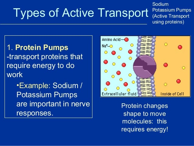 sodium potassium transportation through plasma membrane Unlike most editing & proofreading services, we edit for everything: grammar, spelling, punctuation, idea flow, sentence structure, & more get started now.