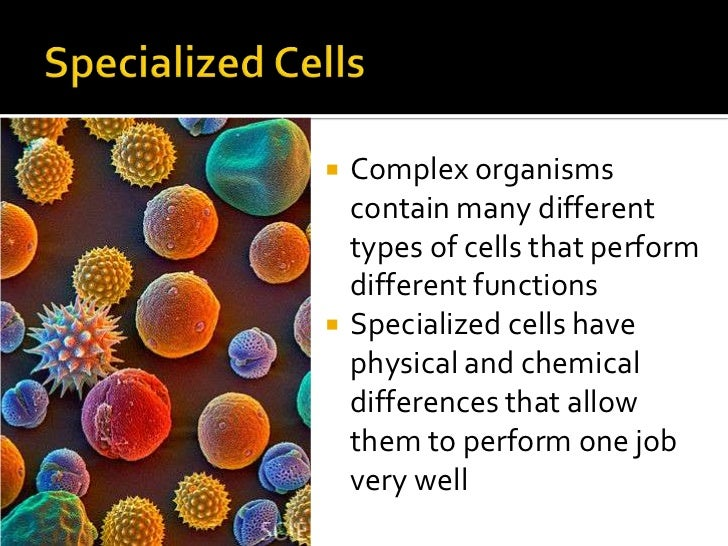 cell theory & types of cells, Human Body