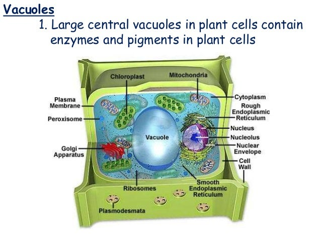 Cell types, part and function
