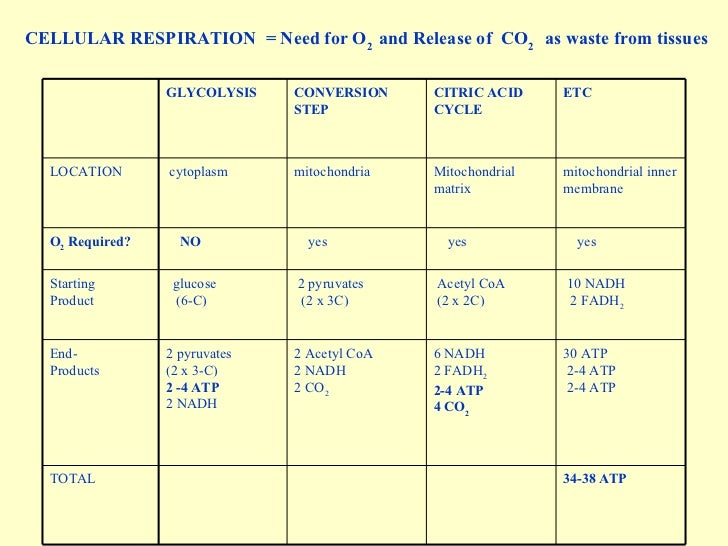 respiration cellular processes metabolic