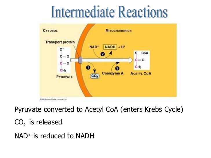 Cellular respiration intermediate reactions ccuart Choice Image