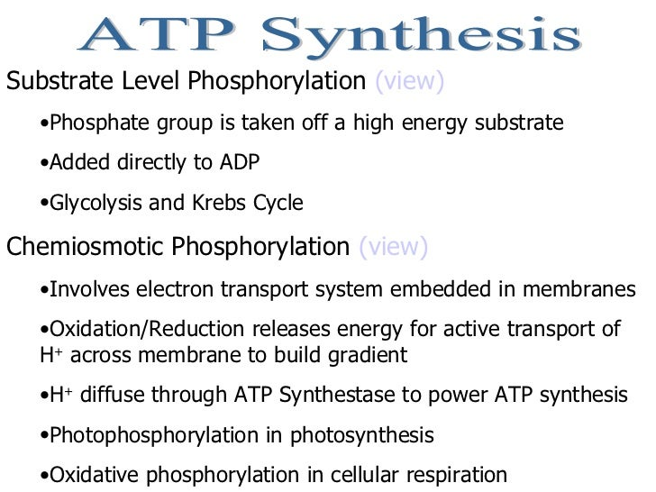 cellular respiration essay questions ap bio Introduction some knowledge that is needed before performing this lab are as follows: first of all, cellular respiration is the metabolic processes whereby certain organisms obtain energy.