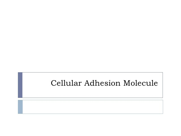 Cellular Adhesion Molecule