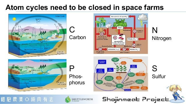 Atom cycles need to be closed in space farms C Carbon P Phos- phorus N Nitrogen S Sulfur