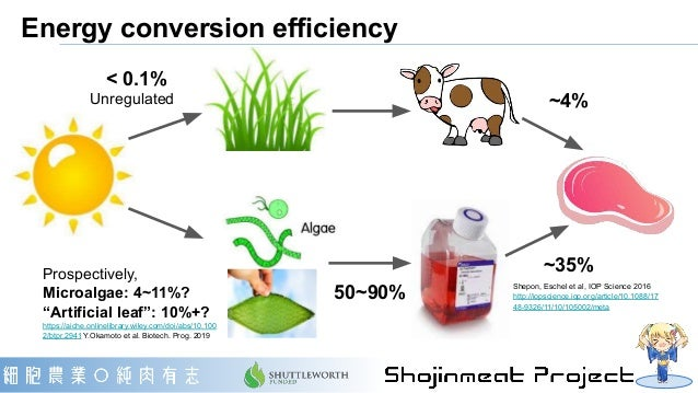 """Energy conversion efficiency < 0.1% Prospectively, Microalgae: 4~11%? """"Artificial leaf"""": 10%+? https://aiche.onlinelibrary..."""
