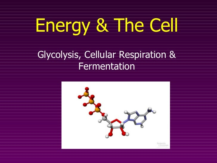 Energy & The Cell Glycolysis, Cellular Respiration & Fermentation