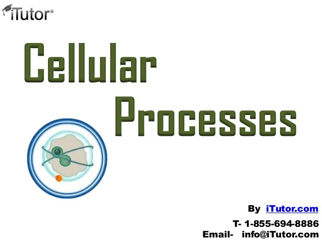 CellularProcessesT- 1-855-694-8886Email- info@iTutor.comBy iTutor.com