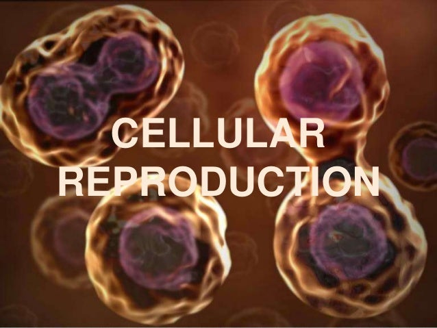CELLULARREPRODUCTION