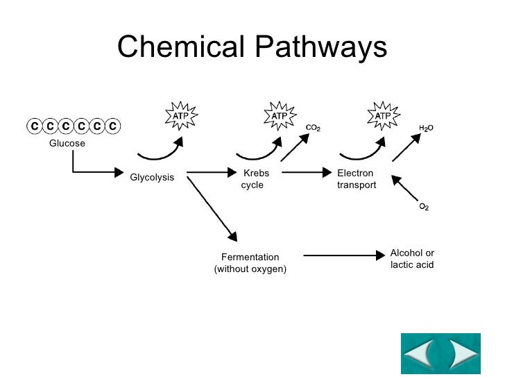 glycolysis and fermentation relationship advice
