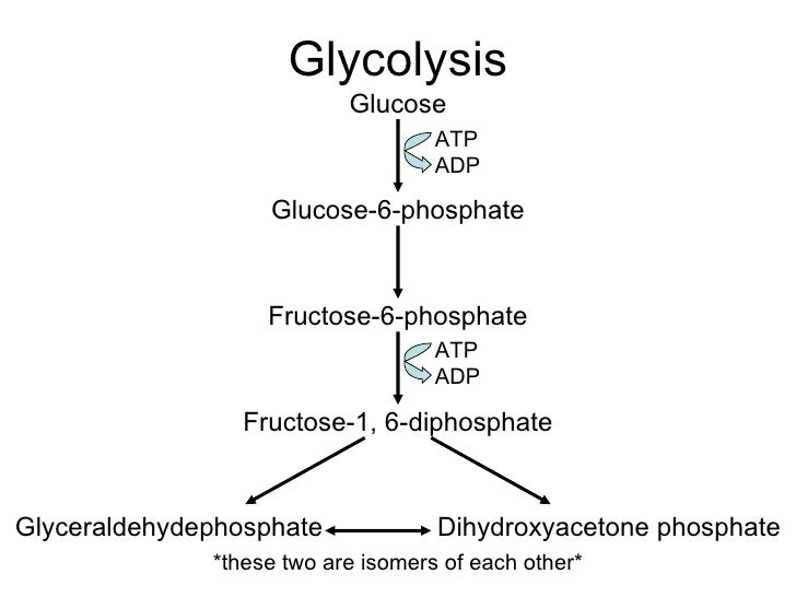 Draw an annotated diagram of glycolysis circuit connection diagram ib biology hl cellular respiration rh slideshare net electron transport chain diagram stages of glycolysis ccuart Gallery