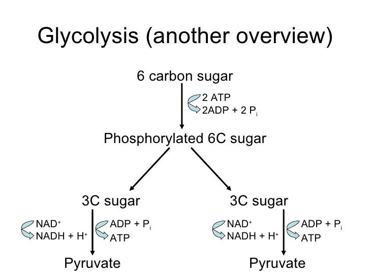 Glycolysis diagram carbon auto electrical wiring diagram ib biology hl cellular respiration rh slideshare net glycolysis and krebs cycle diagram glycolysis diagram biology ccuart Choice Image