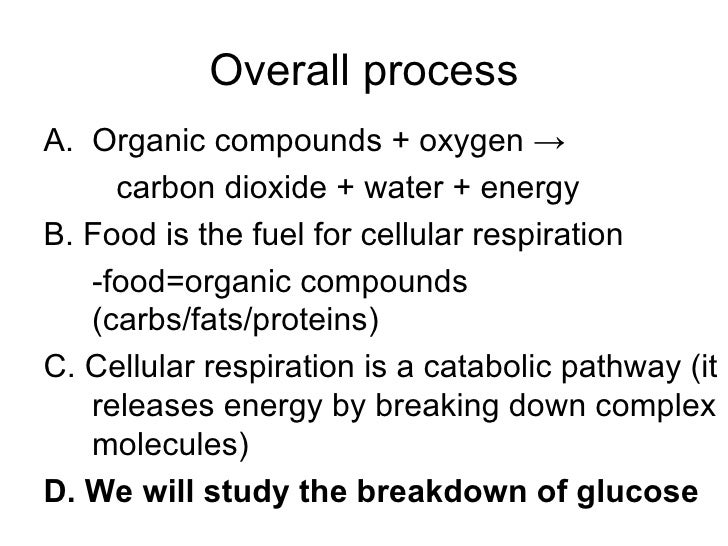 IB Biology HL Cellular Respiration