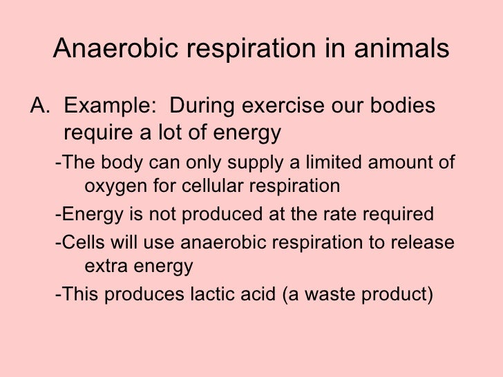 Does anaerobic respiration release energy / Best faerie tale theatre