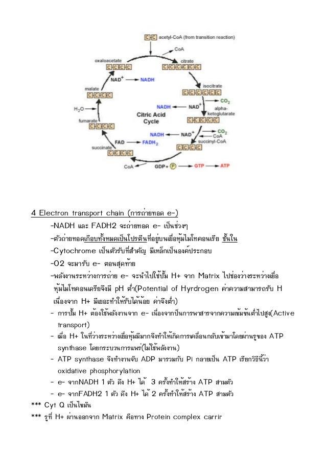 4 Electron transport chain (¡กÒาÃร¶ถè่ÒาÂย·ทÍอ´ด e-)     -NADH áแÅลÐะ FADH2 ¨จÐะ¶ถè่ÒาÂย·ทÍอ´ด e- àเ»ปç็¹นªชè่Çว§งæๆ     -...