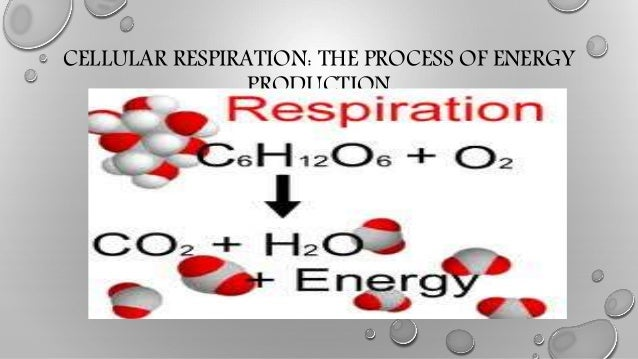 CELLULAR RESPIRATION: THE PROCESS OF ENERGY PRODUCTION