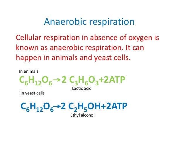 respiration cellular anaerobic oxygen absence mitochondria