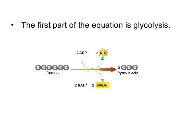 Chapter Cellular Respiration on Cellular Respiration Diagram Mitochondria