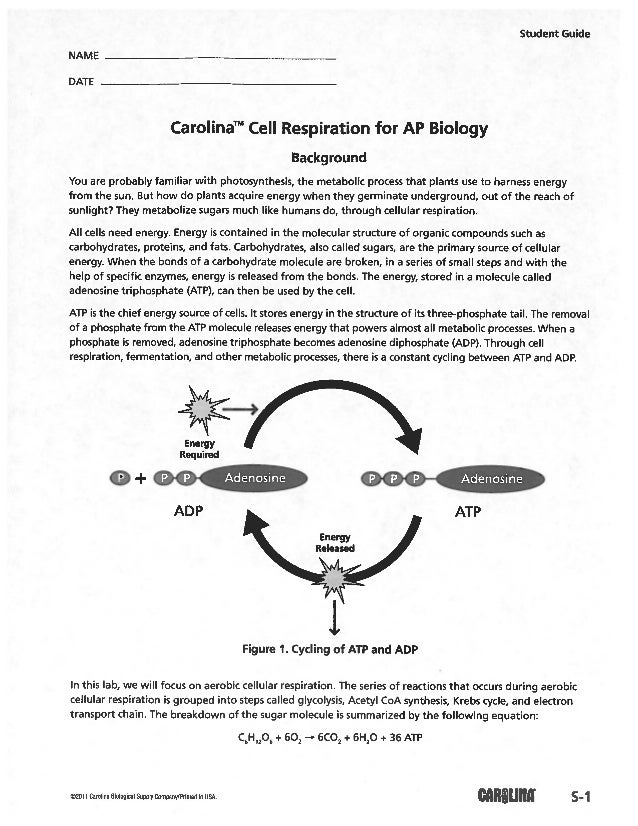 Cellular respiration lab