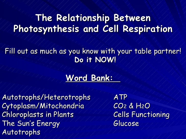 relationship between mitochondria and cellular respiration