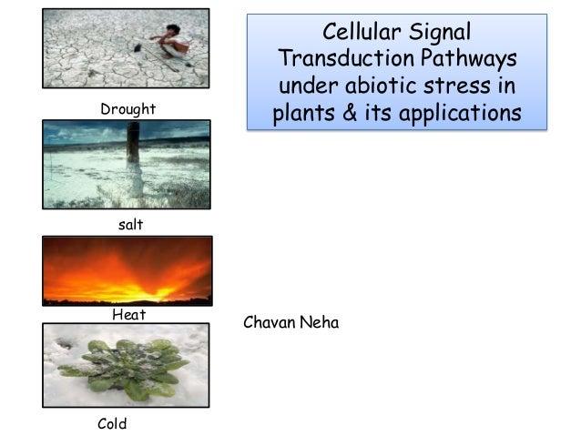 Drought salt Heat Cold Cellular Signal Transduction Pathways under abiotic stress in plants & its applications Chavan Neha