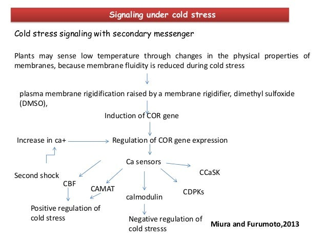 Transgenic approaches for abiotic stress tolerance in plants ppt.