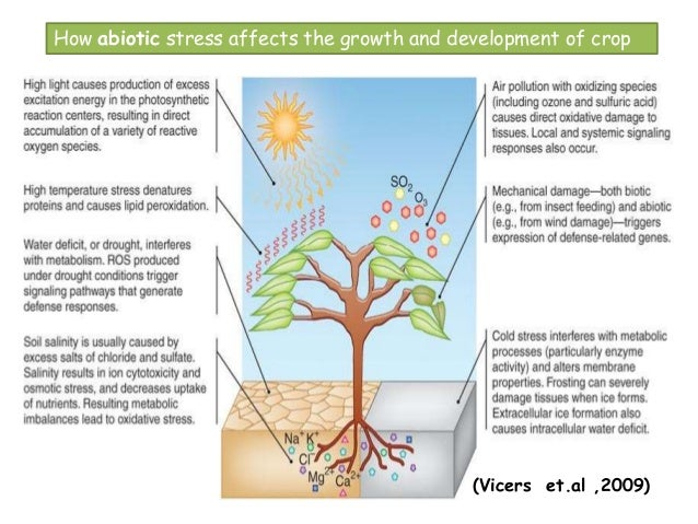 abiotic stres effect on plant by Linking abiotic stress to horticultural flooding stress can affect tree fruit orchards at some point during plant response scenarios to abiotic stress.