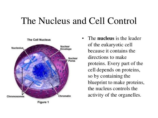 Cellular Structure And Function Ii