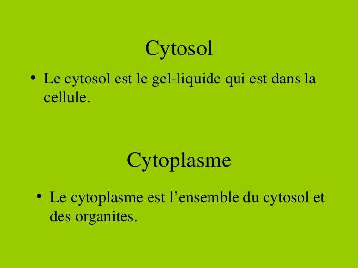 Cytosol <ul><li>Le cytosol est le gel-liquide qui est dans la cellule.  </li></ul>Cytoplasme <ul><li>Le cytoplasme est l'e...