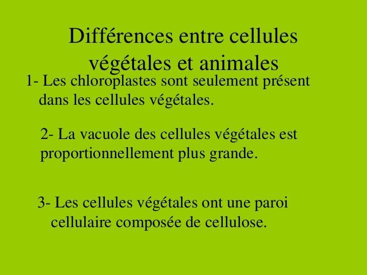 Différences entre cellules végétales et animales 1- Les chloroplastes sont seulement présent dans les cellules végétales. ...