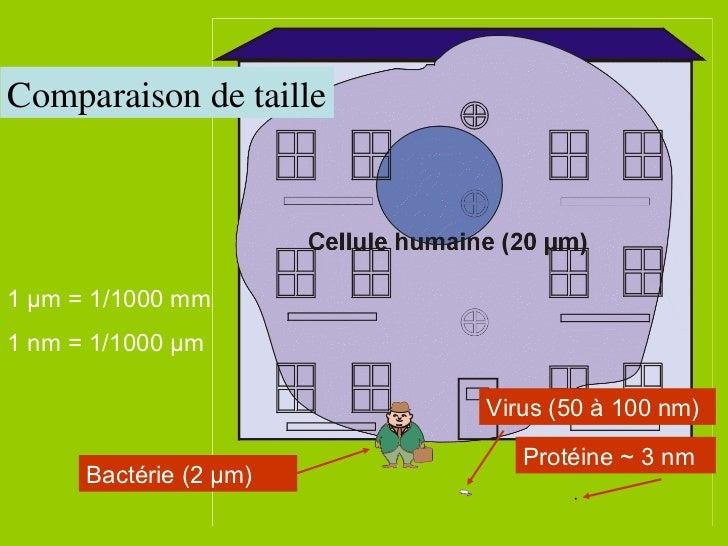 1 µm = 1/1000 mm 1 nm = 1/1000 µm Comparaison de taille Bactérie (2 µm) Virus (50 à 100 nm) Protéine ~ 3 nm