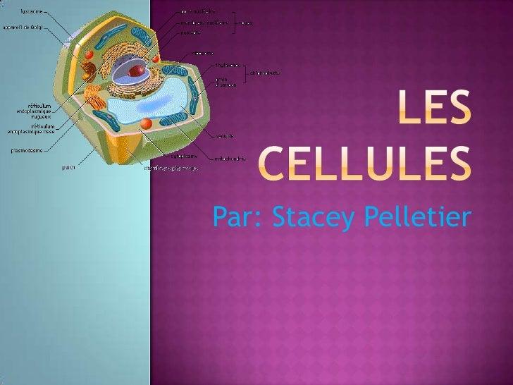 Les cellules<br />Par: Stacey Pelletier<br />