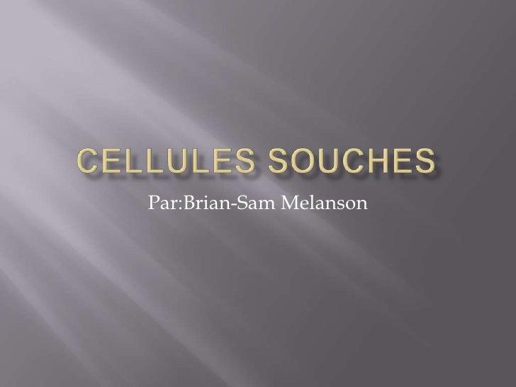 Cellules souches<br />Par:Brian-SamMelanson<br />