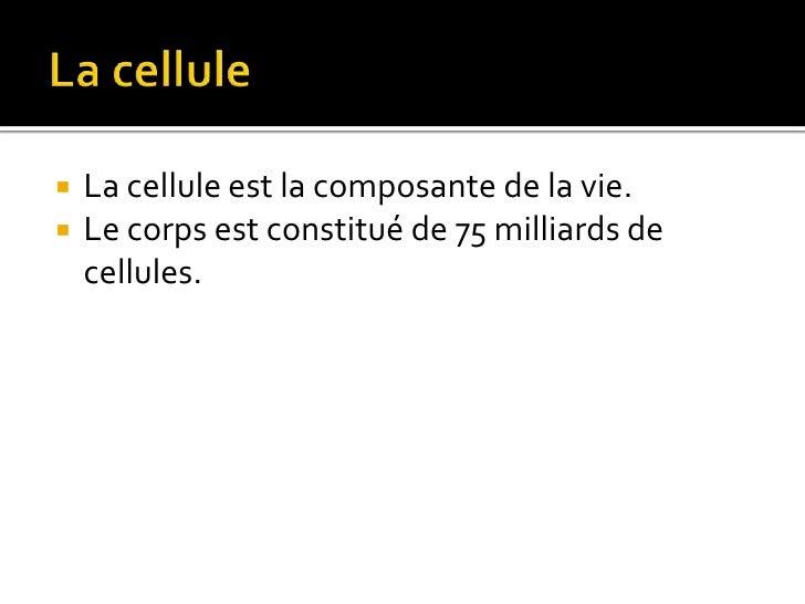 Cellules souches Slide 3