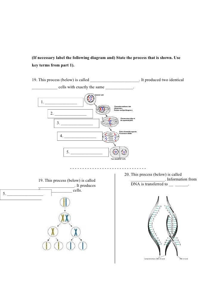 Cell wikki worksheet – Cell Processes Worksheet