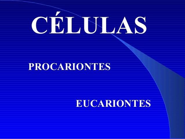 CÉLULAS PROCARIONTES EUCARIONTES