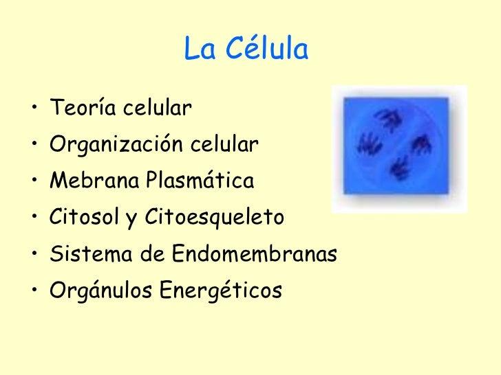 La Célula   <ul><li>Teoría celular </li></ul><ul><li>Organización celular  </li></ul><ul><li>Mebrana Plasmática </li></ul>...