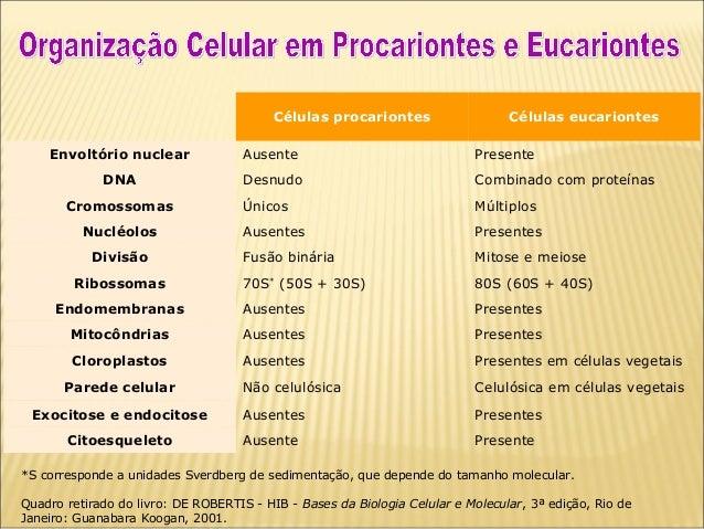 Resultado de imagem para diferença entre eucarionte e procarionte