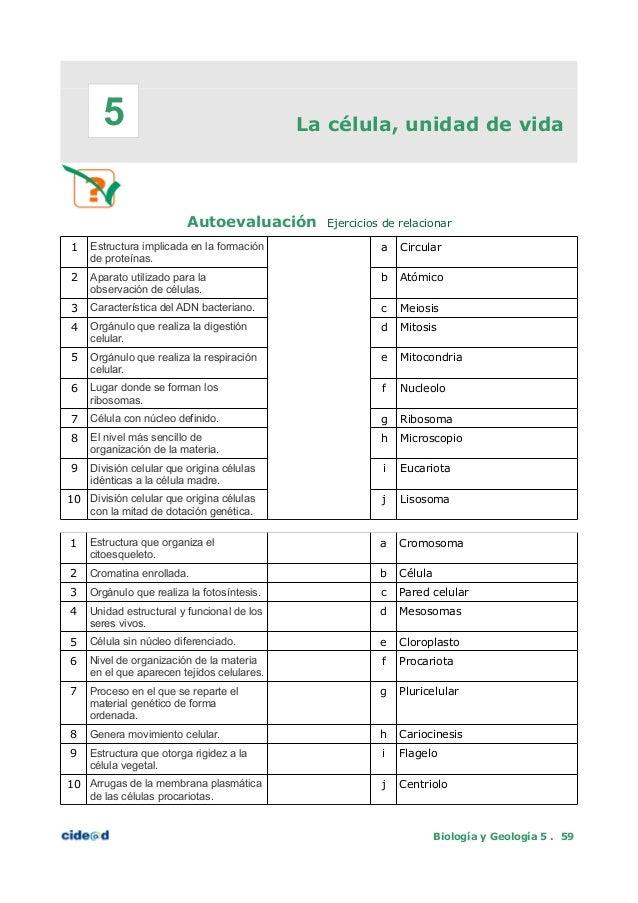 Increíble El Ejercicio Anatomía Celular Y La División 3 Bandera ...