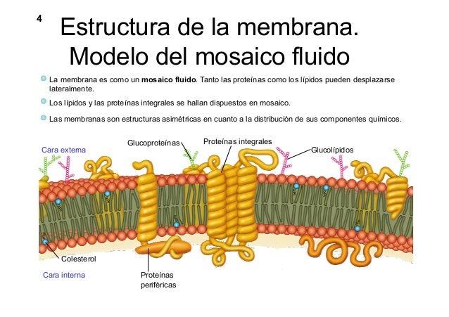 biologia celular membrana plasmatica pdf