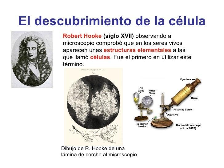 Celula7laminas Slide 2