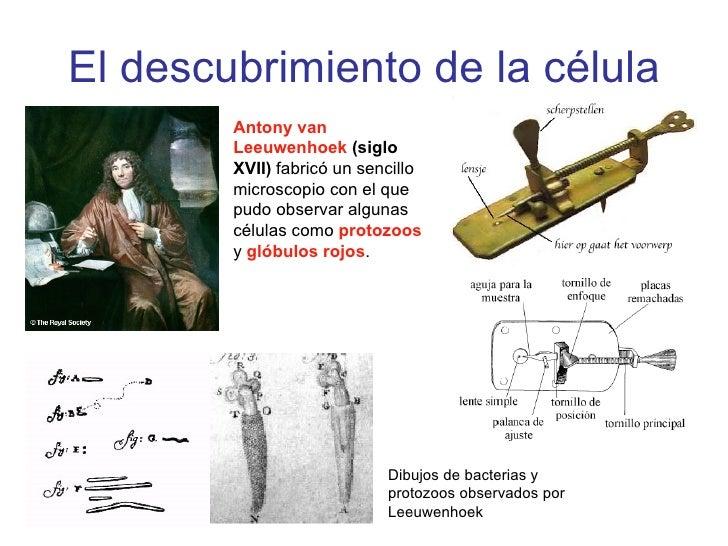 Celula7laminas Slide 3