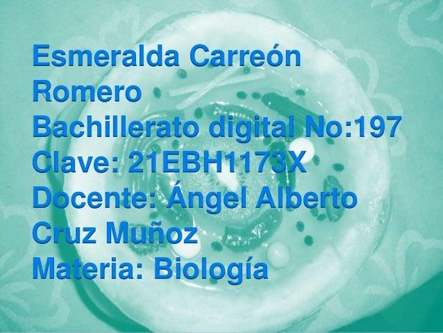 Esmeralda Carreón Romero Bachillerato digital No:197 Clave: 21EBH1173X Docente: Ángel Alberto Cruz Muñoz Materia: Biología