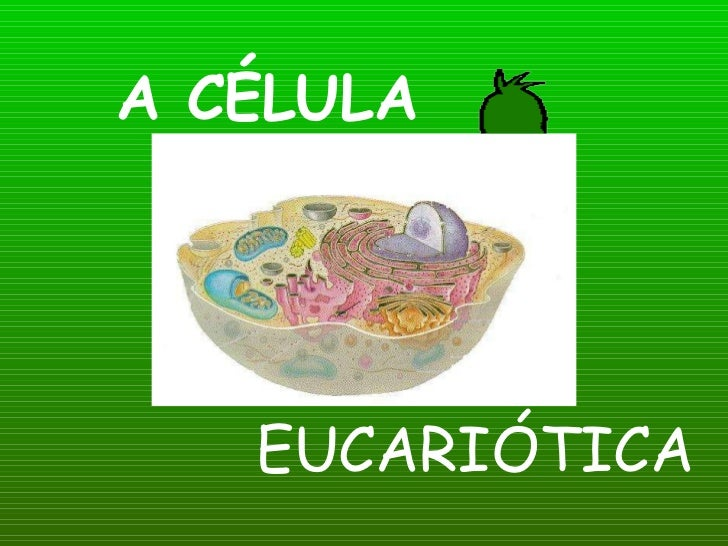 A CÉLULA EUCARIÓTICA
