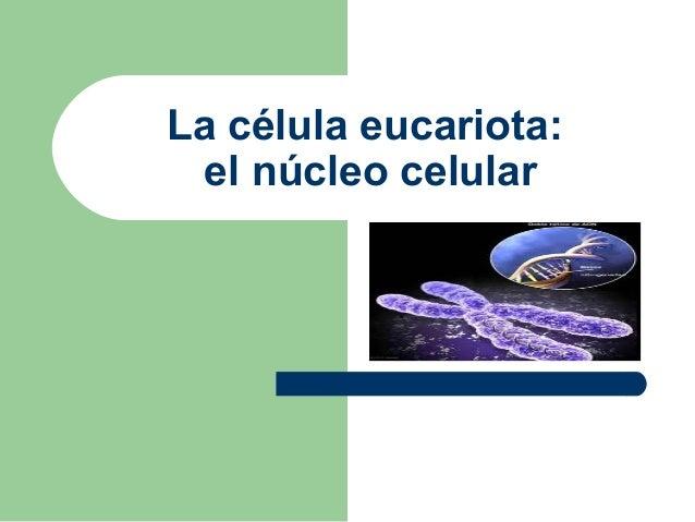 La célula eucariota:  el núcleo celular