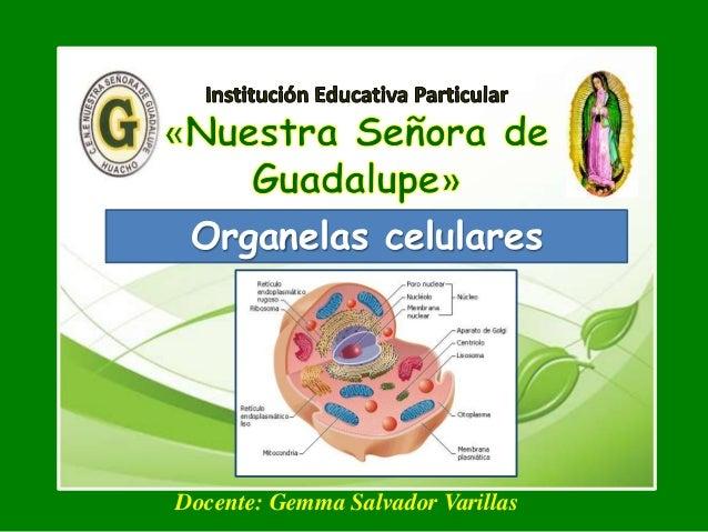 Organelas celulares Docente: Gemma Salvador Varillas