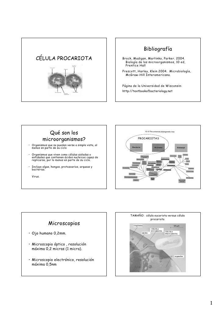 Bibliografía     CÉLULA PROCARIOTA                                Brock, Madigan, Martinko, Parker. 2004.                 ...