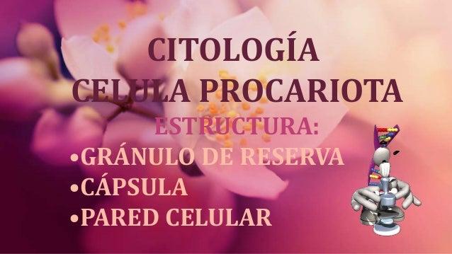 CITOLOGÍA CELULA PROCARIOTA ESTRUCTURA: •GRÁNULO DE RESERVA •CÁPSULA •PARED CELULAR